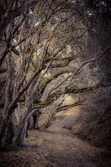 Walk the Path. (Rohit KC Photography) Tags: edited path hike hiking hikingtrail woods trees branches leaves fall nature natural outdoors canon canon5dmarkii ca california 50mm vignette naturalbeauty fresh refreshing