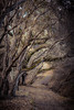 Walk the Path. (rohitsanu1) Tags: edited path hike hiking hikingtrail woods trees branches leaves fall nature natural outdoors canon canon5dmarkii ca california 50mm vignette naturalbeauty fresh refreshing