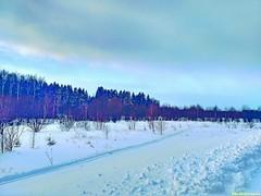 Вдоль дороги на Теряево идет лыжня.