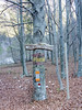 FRIULI SCONOSCIUTO.... (FRANCO600D) Tags: bosco boscaglia alberi faggeta inverno natura freddo fvg friuli friuliveneziagiulia lusevera prealpi canon eos600d franco600d