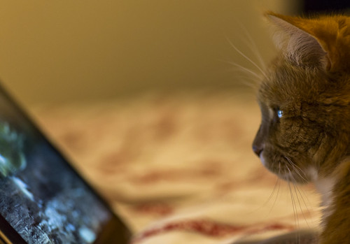 Cat watching youtube.
