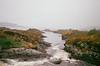 (dorine mathilde madeleine) Tags: ireland connemarra river travel flower lake galway letterfrack film