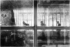 Do not cross the railway lines (Roberto Spagnoli) Tags: train treno fotografiadistrada streetphotography biancoenero blackandwhite controluce backlight railwaystation stazioneferroviaria silhouette viaggio trip cross window