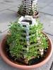 10 (romeo-art.ch) Tags: romeoart romeoartch woodart garden verticalgardening artwork art cress kresse tropaeolum