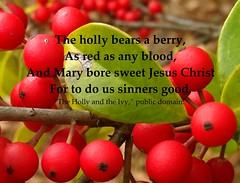 Holly for Christmas (Martin LaBar (going on hiatus)) Tags: holly berries red green christmas blood sinners thehollyandtheivy ivy