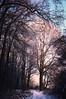 Wintermorning (Waldmädchen16) Tags: outdoor landscape tree path germany morning snow landschaft schnee morgen baum weg pfad