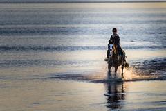 (Baltic) sea horse ;-))) (JayPiDee) Tags: bigma landschaft pferd sigmadg50500mm4563apohsm strand ammeer andersee attheseaside beach horse landscape spiaggia scharbeutz schleswigholstein deutschland