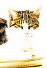 Cassie porttrait (PDKImages) Tags: cat black ragdoll monochrome pet animal feline blackcat asleep eyes calming