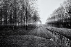 Bursting Bush (Alfred Grupstra) Tags: bw blackandwhite landscape sun sundown trees oostwoud noordholland nederland nl