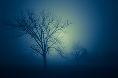 """follow your eyes (listening to """"a forest"""", the cure) (jeneksmith) Tags: canon fog foggy mist mysterious mystical night nighttime lucid scary ominous tree trees silhouette light dark moody blue"""