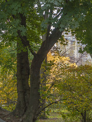 """""""Color of Autumn 2016 In NYC"""" - Central Park Plant Life (nrhodesphotos(the_eye_of_the_moment)) Tags: dsc0388372 """"theeyeofthemoment21gmailcom"""" """"wwwflickrcomphotostheeyeofthemoment"""" colorsofautumn2016innyc autumn season centralpark manhattan nyc plantlife architecture foliage grass trees rocks shadows landscape perspective outdoor tree plant botanical"""