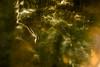 20150527 (zzkt) Tags: longexposure trees light shadow brussels blur bruxelles be brussel f40 bruxxel iso160 brüsel 120sec leicasummiluxm35mmf14asph leicam9 120secatf40