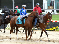 "2015-05-21 (71) r5 Tyler Conner on #9 Miss Mandalay (JLeeFleenor) Tags: photos photography md marylandhorseracing marylandracing pimlico jockey جُوكِي ""赛马骑师"" jinete ""競馬騎手"" dżokej jocheu คนขี่ม้าแข่ง jóquei žokej kilparatsastaja rennreiter fantino ""경마 기수"" жокей jokey người horses thoroughbreds equine equestrian cheval cavalo cavallo cavall caballo pferd paard perd hevonen hest hestur cal kon konj beygir capall ceffyl cuddy yarraman faras alogo soos kuda uma pfeerd koin حصان кон 马 häst άλογο סוס घोड़ा 馬 koń лошадь maryland"