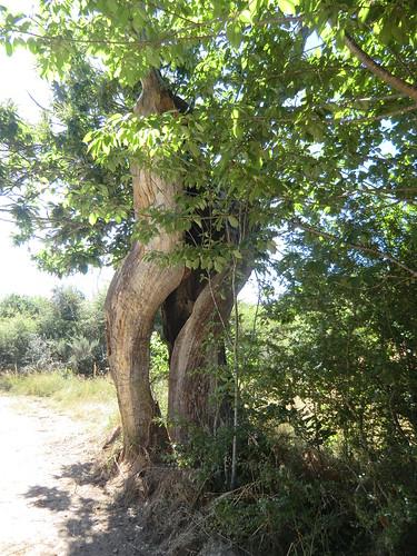 Fotografía Paquita Valdi Marcha 391 27 y 28 de Junio Parque Natural de la Encina de Lastra Ourense 2 (1)
