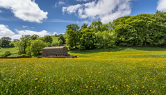 swaledale meadows (Photography by Kevin Cook) Tags: yorkshire meadows swaledale