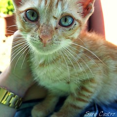 Charlot (SaraCaas) Tags: life blue summer orange pet naturaleza colour cute green love nature beautiful beauty look cat puppy photography photo nice eyes perfect colorful pretty photographer natural live young picture like pic gato cachorro lovely naturaly