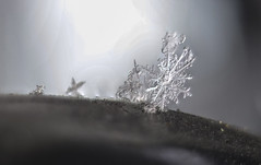 #ICE at the #Corner of the Balkony (nicoheinrich86) Tags: unique beautiful snowfall photograph weather frozen freue frost kalt cold closeup season crystal snow macromondays macro ice licht light 52of2017 corner bokeh details dof d5300 deutschland pov winter