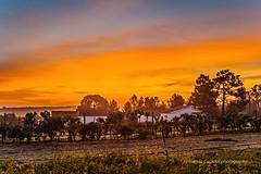 Sunrise (Capturedbyhunter) Tags: fernando caçador marques fajarda coruche ribatejo santarém portugal pentax k1 mir 24m 20 f2 f20 35 35mm sunrise nascer do sol landscape manual focus focagem foco inverno winter