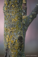 "Inverno ""geloso"" / Winter ""jealous"" (Ag-NO3 Angelo Sampino) Tags: inverno winter freddo could gelo ice albero tree fusto stem corteccia bark ramo branch nikon d700 agno3 © angelo sampino"