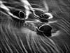 F_47A4899-BW-Canon 5DIII-Canon 70-300mm-May Lee 廖藹淳 (May-margy) Tags: maymargy bw 黑白 石頭 海水 海浪 臉譜 線條造型與光影 linesformandlightandshadows 天馬行空鏡頭的異想世界 mylensandmyimagination 心象意象與影像naturalcoincidencethrumylens 台東縣 台灣 中華民國 taiwan repofchina f47a4899bw pebbles beach 海灘 watertracks 水痕 facesinplaces taitungcounty canon5diii canon70300mm maylee廖藹淳