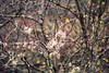 Autumn fairy (stefaniebst) Tags: branche tree arbre nature naturescene naturelover natural automne autumn fall poésie poetry fairy fairytale beautiful ariège france bokeh botanique botanic flore flora element vegetation lichen forest forêt woods woodland underwood
