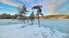God Jul !  ¡Bon Nadal! Merry Christmas! Joyeux Noël Feliz Navidad! Frohe Weihnachten! (Blackpeppereye) Tags: sweden apples appletree winter snow joyeuxnoël froheweihnachten bonnadal feliznavidad godjul merrychristmas christmas