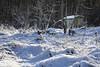 Dahenfeld im Winter (G.Hoelzel) Tags: dahenfeld ortskern waldkindergarten wegweiser winter frost pferde im schnee neckarsulm