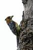 2016 10 14_Crested Barbet-1.jpg (Jonnersace) Tags: canon safari lowersabie kruger krugernationalpark crestedbarbet