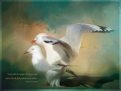 We are each of us angels with only one wing, and we can only fly by embracing one another. (Luciano De Crescenzo)  ** Explored ** (boeckli) Tags: birds seagulls bird vogel texture texturen textures outdoor bunt farbig bright painterly colourful rahmen möven vögel poetography jaijohnson lucianodecrescenzo photoborder australia beach photoshop nature natur strand deewhy sydney untouchabledream