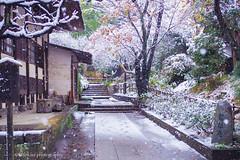 First snowfall in Kamakura (Nov.2016) (littlekiss☆) Tags: kamakura snow snowfall autumn temple engakuji japan winter littlekissphotography