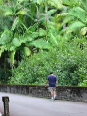 Onomea Bay Scenic Drive (chiavatti) Tags: bridge hawaii honeymoon pants scenicdrive onomea chiavatti hamkua