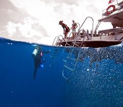 ou657071pw (gerb) Tags: topf25 topv111 1025fav 510fav wow boat topv555 topv333 underwater topv1111 topv999 scuba pi topv777 diver d100 littlecayman overunder pfo tvx photofaceoffwinner photofaceoffplatinum pfogold pfop