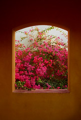 A garden view: Sheraton Miramar Resort El Gouna, Hurghada - Egypt (mnadi) Tags: pink flowers summer orange abstract window garden nikon warm artistic outdoor earth egypt sunny bougainvillea fuschia gouna frame creativecommons vista sheraton ethnic tones hurghada  nubian bougainvilleas  nikonstunninggallery