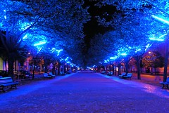 Unter den Linden ([martin]) Tags: lighting street blue light berlin festival night martin linden unterdenlinden unter illumination artificial parkway blau avenue festivaloflights martinbiskoping