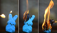 bunny peeps in peril #8 (foreversouls) Tags: fire candy flame peep melt