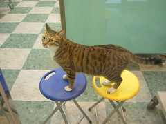 My son (jacky elin) Tags: cats brown male cat mix tabby 2006 jacky 貓
