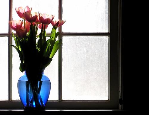 フリー写真素材, 花・植物, ユリ科, チューリップ, 窓辺,