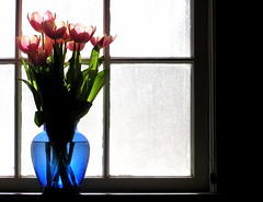 [Free Image] Flower/Plant, Liliaceae, Tulip, By The Window, 201008180700