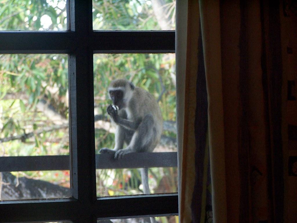 Kenyan Holiday (safari) 058