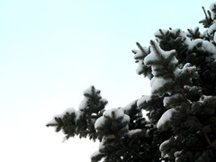 March Snowstorm (MaureenShaughnessy) Tags: trees winter plants white snow plant cold tree nature garden montana seasons snowstorm evergreen spruce botanica coldseason everythingisalive plantshavespirit botanicawildtame christmasadvent seasonalrhythmswinter