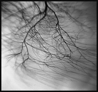 hawkeye ~ willow tree