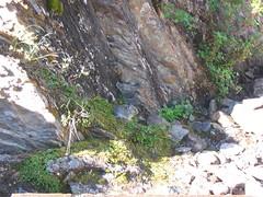 Pika at Moraine Lake (Just Peachy!) Tags: banffnationalpark canadianrockies rockiesroadtrip