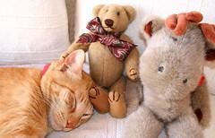Simba and Friends (rainy city) Tags: sleeping cat orangecat stuffedanimals simba commentonmycuteness gggcozy