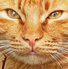 eyes fo the Lion... (PrinceVlad) Tags: italy art cat garden eyes italia arte occhi gatto boboli giardino princevlad mywinners bestofcats boc0807
