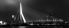 The Swan (Arkfinder) Tags: bridge bw holland netherlands architecture design blackwhite swan rotterdam ponte nederlands architettura olanda unstudio paesibassi vanberkel