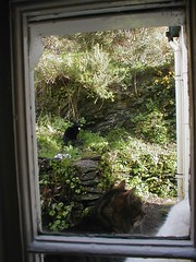 Kats (geniweeny) Tags: ireland window breakfast cat kitty patience