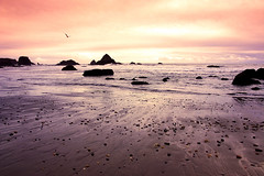 Visions of Inspiration (| HD |) Tags: ocean desktop windows light sunset wallpaper inspiration seascape bird 20d beach nature silhouette oregon canon landscape coast bravo photoshoot searchthebest pacific northwest seagull vision microsoft vista hd harris darwish hamad