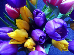 Tulips Colour! (Deililly) Tags: cameraphone pink flowers white green yellow wow purple tulips gift colourful gtaggroup goddaym1
