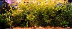 fish aquarium monthlyscavengerhunt msh0406 msh040619