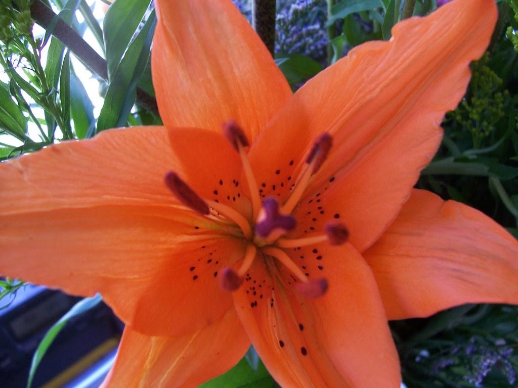 """""""orange""""-ya glad its Easter time?"""